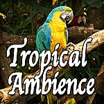 Natural Sounds Tropical Ambience (Nature Sounds)
