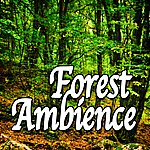 Natural Sounds Forest Ambience (Nature Sounds)