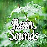 Natural Sounds Rain Sounds (Nature Sounds)
