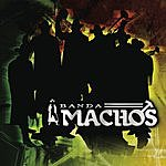 Banda Machos Arremángala Arrempújala (Single)