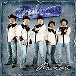 Palomo Pasión