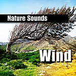 Nature Sounds Wind