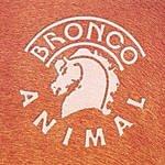 Bronco Animal