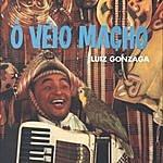 Luiz Gonzaga Ô Véio Macho