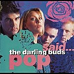 The Darling Buds Pop Said...