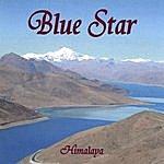 Blue Star Himalaya