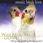 Bradley Joseph Music Birds Love: While You Are Gone