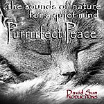 David Sun Purrrrfect Peace (The Sounds Of Nature For A Quiet Mind)