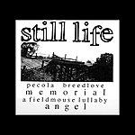Still Life Perdoname Madre