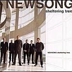 NewSong Sheltering Tree