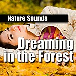 Nature Sounds Dreaming In The Forest