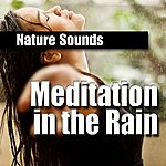 Nature Sounds Meditation In The Rain