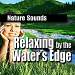 Nature Sounds Relaxing By The Water's Edge