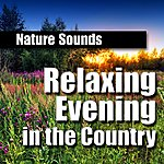 Nature Sounds Relaxing Evening In The Country