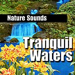 Nature Sounds Tranquil Waters