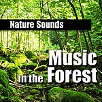 Nature Sounds Music In The Forest (Music And Nature Sound)