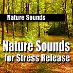 Nature Sounds Nature Sounds For Stress Release