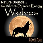David Sun Wolves (Nature Sounds For Vibrant-Dynamic Energy)