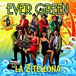 Evergreen La Zitellona