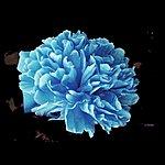 J.T. Donaldson Make You High (2-Track Single)