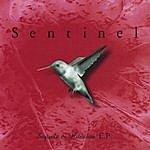 Sentinel Sequels & Hunches E.p.