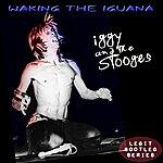 Iggy Pop Waking The Iguana