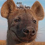 Stories Laughing Hyena (Limited Edition)
