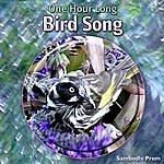 Sambodhi Prem One Hour Long Bird Song