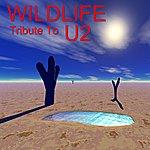Wild Life Tribute To U2