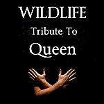 Wild Life Tribute To Queen