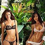 Wild Life Tribute To Roxy Music