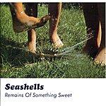 Seashells Remains Of Something Sweet