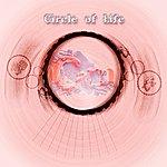 Cam Circle Of Life