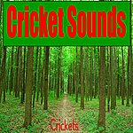 The Crickets Cricket Sounds