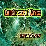 Nuada Luminescent Grass