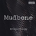 Mudbone Evolution