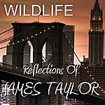 Wild Life Reflections Of James Taylor