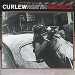 Curlew North America