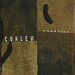 Curlew Paradise