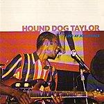 Hound Dog Taylor Live At Joe's Place