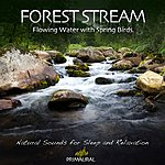 Tim Nielsen Forest Stream - Flowing Water With Spring Birds - Single