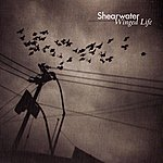 Shearwater Winged Life
