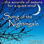 David Sun Song Of The Nightingale (The Sounds Of Nature For A Quiet Mind)