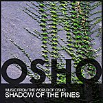 Music From The World Of Osho Shadow Of The Pines