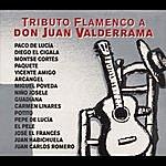 Juanito Valderrama Tributo Flamenco A Don Juan Valderrama