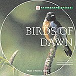 Philippe Bestion Nature Atmosphere: Birds Of Dawn