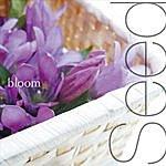 Bloom Seed