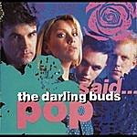 The Darling Buds Pop Said