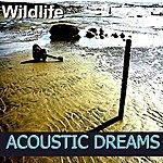 Wild Life Acoustic Dreams