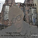 The Squirrel Is You Foreal (Feat. Gucci Mane & Hood Tales) - Single